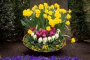 Nordfriedhof_April_2018#39-9417
