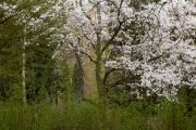 Nordfriedhof_April_2018#10-9293