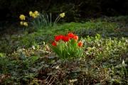Nordfriedhof_April_2018#9-9291