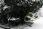 Wiesbaden Nordfriedhof_Dezember_0005