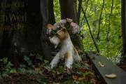 schmuckhund-1297