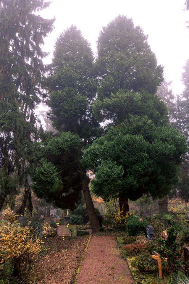 nordfriedhof_portrait7