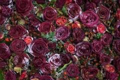 rosen-5374
