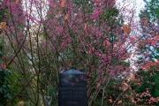 Wiesbaden_Nordfriedhof_201811#35-0587