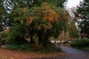 Wiesbaden_Nordfriedhof_201811#38-0832
