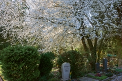 Nordfriedhof_2020031-2990