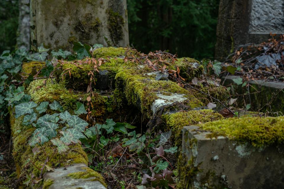 nordfriedhof_april21