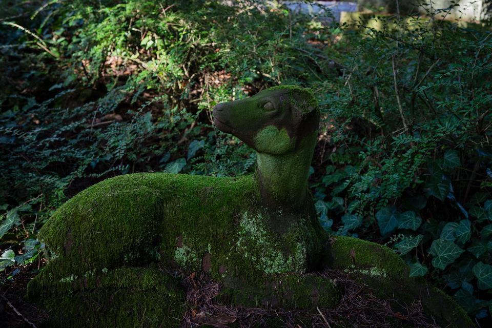 nordfriedhof_Februar_2019#22-2654