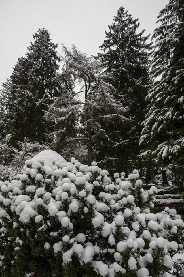 Nordfriedhof_Januar215