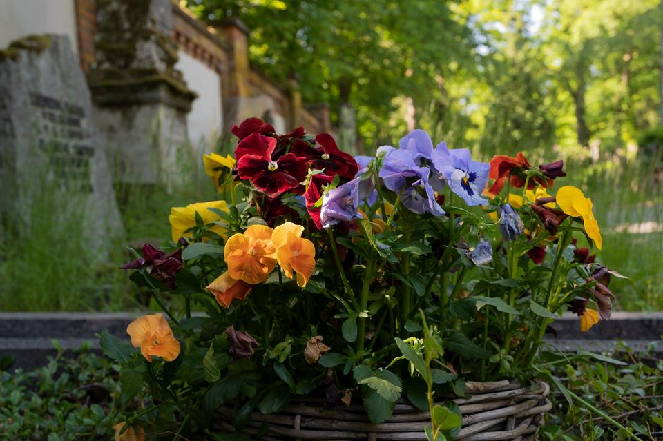 Nordfriedhof_0519-8644
