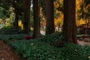 Wiesbaden_Nordfriedhof_201811#12-0444
