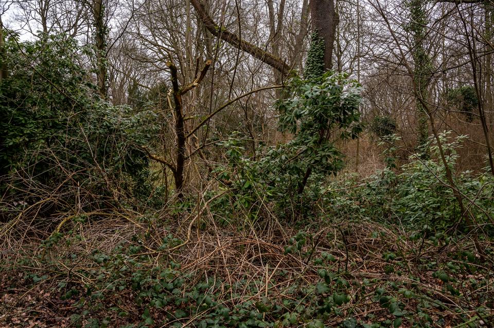 Ostfriedhof18