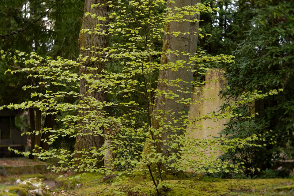 Nordfriedhof_April_2018#36-9403