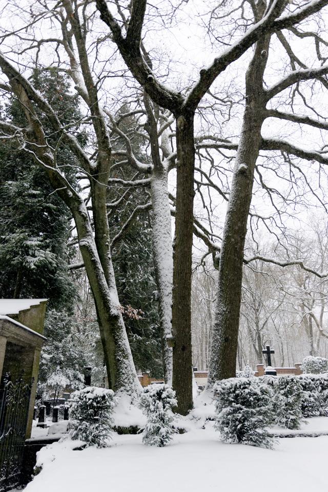 Wiesbaden Nordfriedhof_Dezember_0008