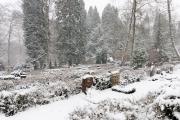 Wiesbaden Nordfriedhof_Dezember_0010