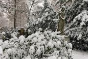 Wiesbaden Nordfriedhof_Dezember_0020