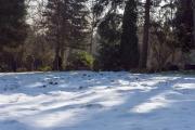 nordfriedhof_feb#31-6954