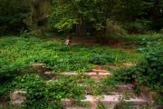 Nordfriedhof_Juli#44-4159