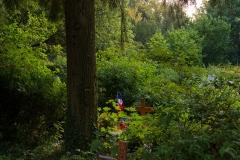 Nordfriedhof_Juli#56-4222