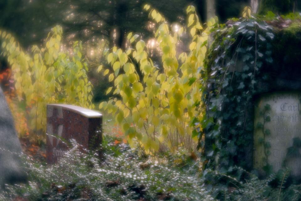 nordfriedhof_totensonntag#17-4646