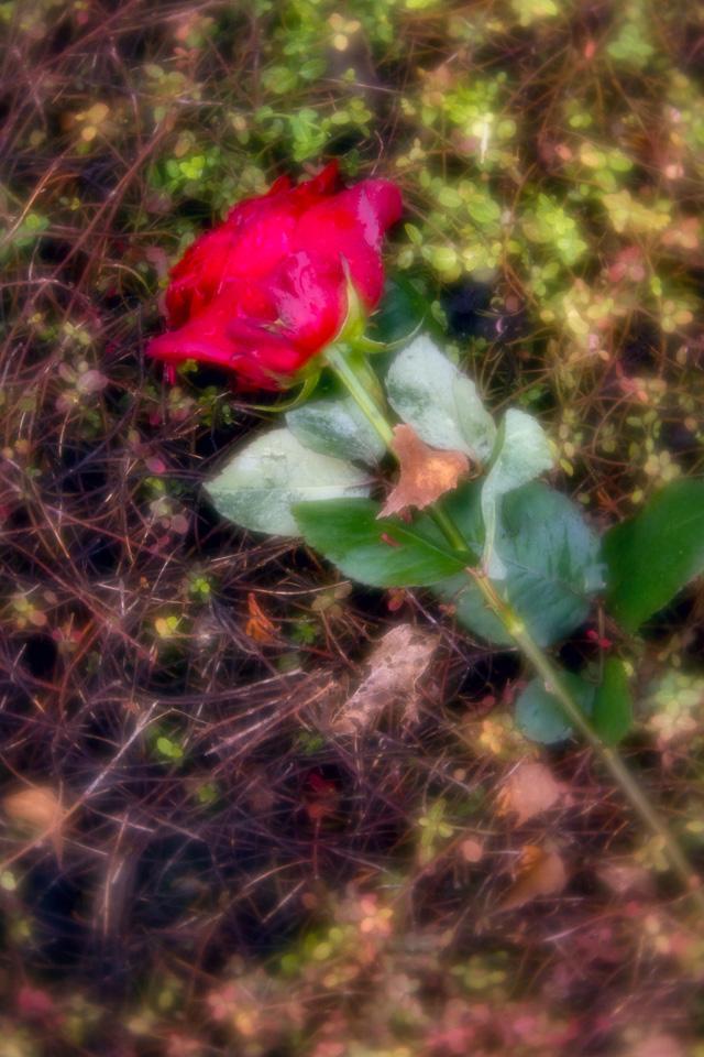 nordfriedhof_totensonntag#21-4641