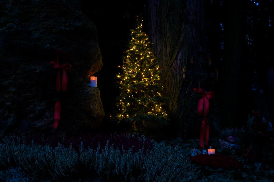 Nf_Weihnachten05-62351